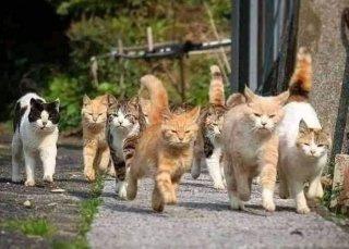 cat4.thumb.JPG.9a8be03c8f3499818dd145f607792649.JPG